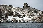 South Shetland-2016-Elephant Island (Point Wild)–Chinstrap penguin (Pygoscelis antarctica) 02.jpg