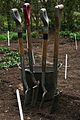 Spades And Forks Ready For Gardening. RHS Wisley Garden Surrey UK.jpg
