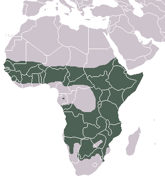Spotted Hyaena area