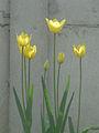 Spring - 28 (2009). (13911064934).jpg