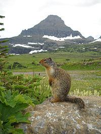 グレイシャー国立公園の画像 p1_2