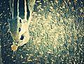 Squirrell posing.jpg