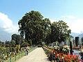 Srinagar - Shalimar Gardens 32.JPG