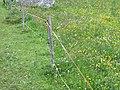St. Moritz Hike-54 (9706539031).jpg