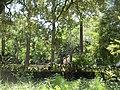 St Charles Avenue at Audubon Park New Orleans 11 June 2020 22.jpg