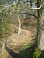 Staircase through the woods - geograph.org.uk - 695925.jpg