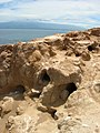 Starr-050404-5457-Portulaca oleracea-habitat and wedgetailed shearwater burrows-Mokeehia-Maui (24624041152).jpg