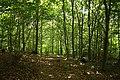 Steenbergse bossen 27.jpg