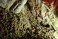 Stone corals in the cave of Kilkis, Greece.jpg