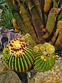 Succulents - Photo by Giovanni Ussi 10.jpg