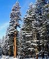 Sun on New Snow, Tuolumne Meadows, Yosemit5-15 (23726630766).jpg