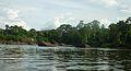 Suriname 145 Anaula vanaf de rivier.JPG