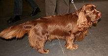 Gifts for Sussex Spaniel Dog Lovers