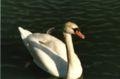 Swan - lilla holmen - 2.jpg
