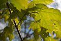 TU Delft Botanical Gardens 51.jpg