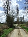 Tall trees at Hempstead, Essex (geograph 3502822).jpg