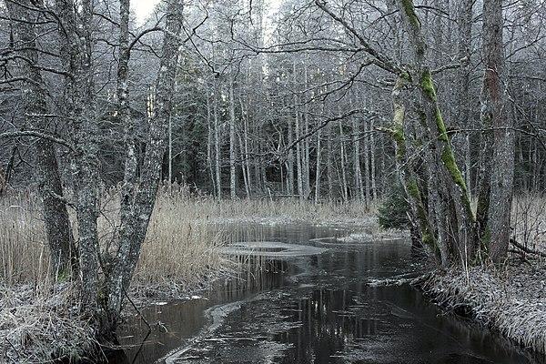 Tarvasjõgi nov. 2013.jpg