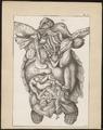 Testudinidae spec. - ingewanden - 1700-1880 - Print - Iconographia Zoologica - Special Collections University of Amsterdam - UBA01 IZ11600021.tif