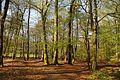 Teutoburger Wald Schierloher Feld 04.JPG