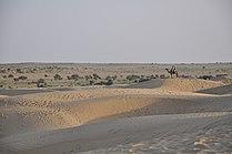 Thar desert 1.JPG