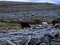 The Burren 02.jpg
