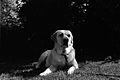 The Dog (9330804447).jpg