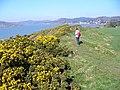 The Headland, Castlehill Point - geograph.org.uk - 398821.jpg