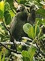 The Indian Cormorant.jpg