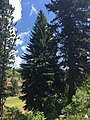 The Payette National Forest in Idaho (30433060180).jpg