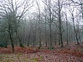 The Royal Forest of Dean - geograph.org.uk - 1621983.jpg
