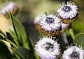 The Secret Lives of Plants (14940998745).jpg