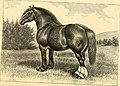 The breeds of live stock, and the principles of heredity (1887) (14777984811).jpg