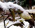 The first snow!.jpg