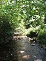Thornton River.jpg
