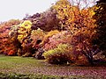 Thorp Perrow in Autumn colours - geograph.org.uk - 592040.jpg