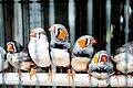 Tiny Birds (8046840183).jpg