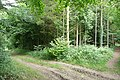Tracks in Pitton Copse - geograph.org.uk - 970684.jpg