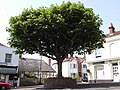 Tree in the village centre - geograph.org.uk - 1396997.jpg