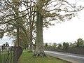 Trees along the boundary of Plas Brereton - geograph.org.uk - 276290.jpg