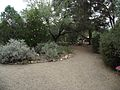 Tucson botanical gardens.jpg