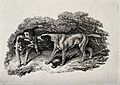 Two hunting dogs growling at each other over a dead fowl. Et Wellcome V0021839.jpg