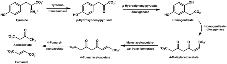 Tyrosine Wikipedia