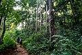 USAID Measuring Impact Conservation Enterprise Retrospective (Philippines; Nagkakaisang Tribu ng Palawan) (39581745244).jpg