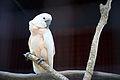Unknown Bird 1.jpg