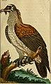 Unterhaltungen aus der Naturgeschichte (1795) (14747354874).jpg