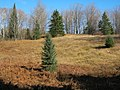 Upland Opening - panoramio (1).jpg