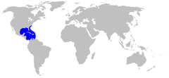 Range of the yellow stingray