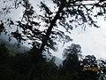 Vallpari tree with clouds.jpg