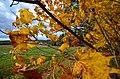 Vermont (6255715240).jpg