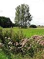 View across a marsh pasture - geograph.org.uk - 929547.jpg
